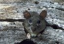 Do Sound Repellent Devices Really Keep Rodents Away?