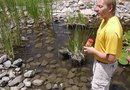 How to Prevent Mosquitoes at Small Ponds