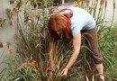 How to Prune Red Fountain Grasses