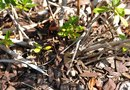 How to Stop Weeds From Growing Through Mulch