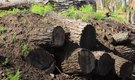 How to Plant a Garden in Rotten Logs
