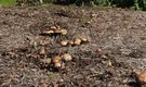 How to Transplant Mushrooms