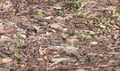 How to Reduce a Muddy Yard Using Mulch