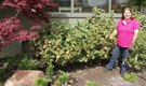 How to Prune Bushes After Cold Weather