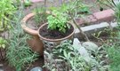 How to Design an Herb Garden With Pots & Pavers