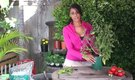 How to Trim a Tomato Plant for Better Harvest