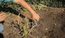 How to Prune Overgrown Ornamental Shrubs