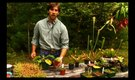 How to Prune Carnivorous Plants