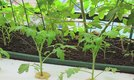 What Do You Need to Grow Hydroponics?