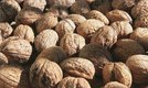 How to Plant a Walnut Seed