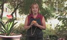 How to Care for a Potted Lemon Tree
