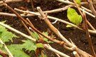 Tips on Pruning Hydrangeas