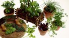 [Potted Herbs] | How to Grow Potted Herbs for Profit