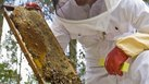 [Grants] | Grants for Starting an Apiary