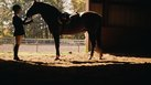 How to Start a Farrier Business