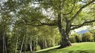 [Things] | Things to Study to Become a Certified Arborist