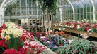 How to Set Up a Plant Nursery