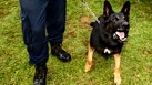 [Canine Officer] | Salary of a Canine Officer