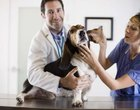 What Does a Vet Tech Make Hourly?