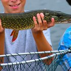 How to Fish for Northern Pike With a Bobber and Minnow