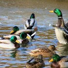 How to Build Permanent Duck Blinds