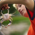 The Best Times for Crabbing