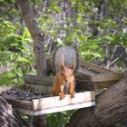 How to Keep Squirrels Out of the Bird Feeder