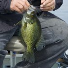 How to Use Crappie Jigs