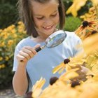 Halloween Games and Ideas for Daisy Girl Scouts