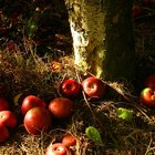 The Rotten Apple Theory