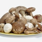 What Seasonings Taste Good on Mushrooms?