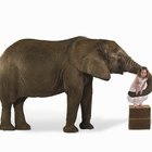 Elephant Games for Preschoolers
