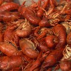 """Crawdad Cleaning, Cooking, & Eating"""