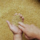 How to Ferment Grains
