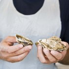 Can Scalloped Oysters Be Prepared Ahead?