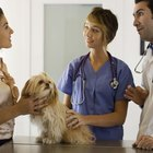 Skills Required for a Veterinary Assistant