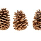 Pinecone Activities for Kids