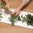 How to Keep and Store Watercress