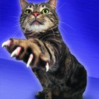 Pros & Cons of Declawing Cats