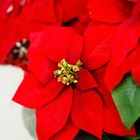 How to Make a Simple Poinsettia Craft with Young Children
