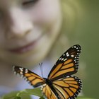 Wildlife Conservation Project Ideas for Kids