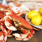 How Long After Catching Should You Cook Crab?