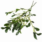 Mistletoe Crafts for Kids