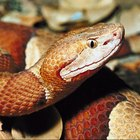 How to Identify a Wild Snake Species in Illinois