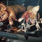 Roasting a Pig on a Gas Barbecue