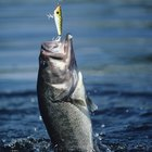 How to Fish From the Shore for Saltwater Fish