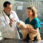 What Are the Duties of a Veterinary Tech?