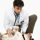Salary Range of Veterinarians
