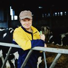 How Much Money Does a Dairy Cattle Farmer Make?