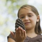 Children's Christmas Activities With Pine Cones